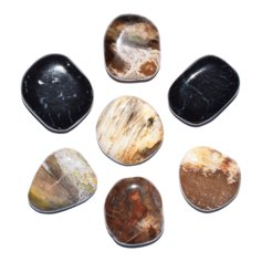 Petrified Wood, Flat (1 piece)
